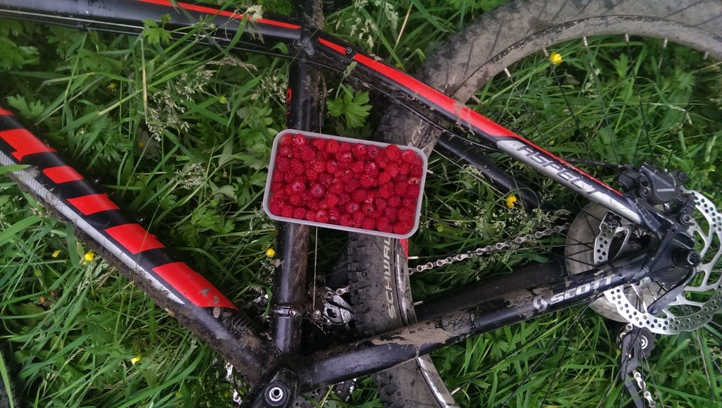 Wild raspberries on Tullos Hill