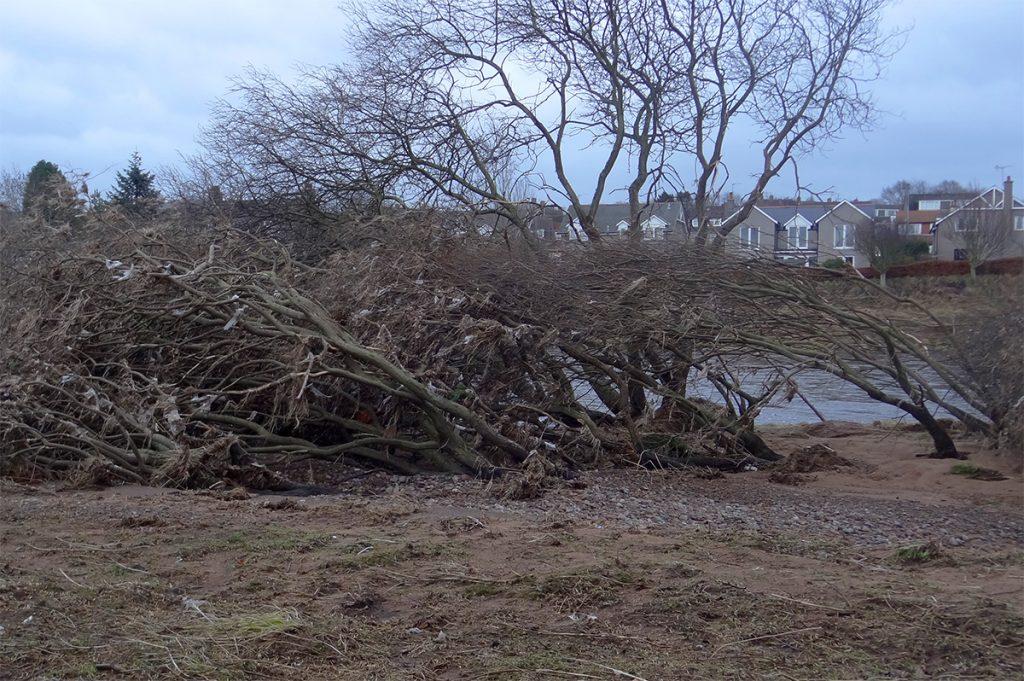 Flood flattened trees