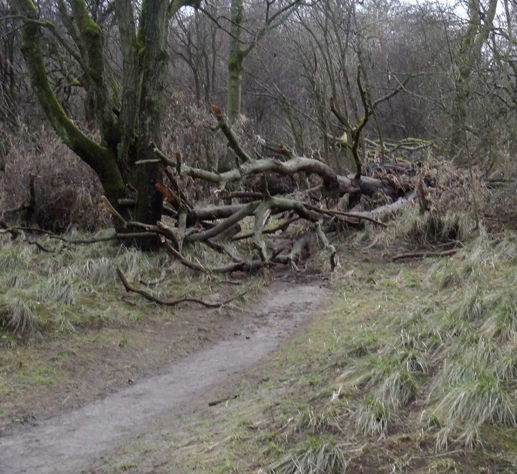 Path blocked by debris