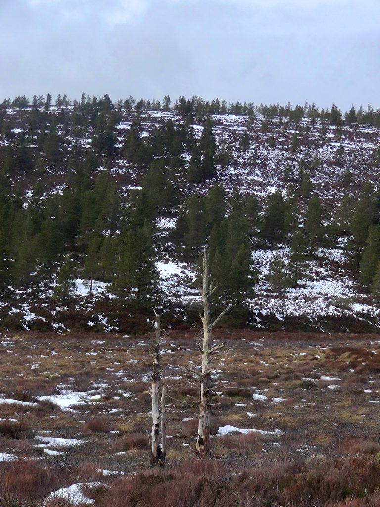 Tree remants on the moor