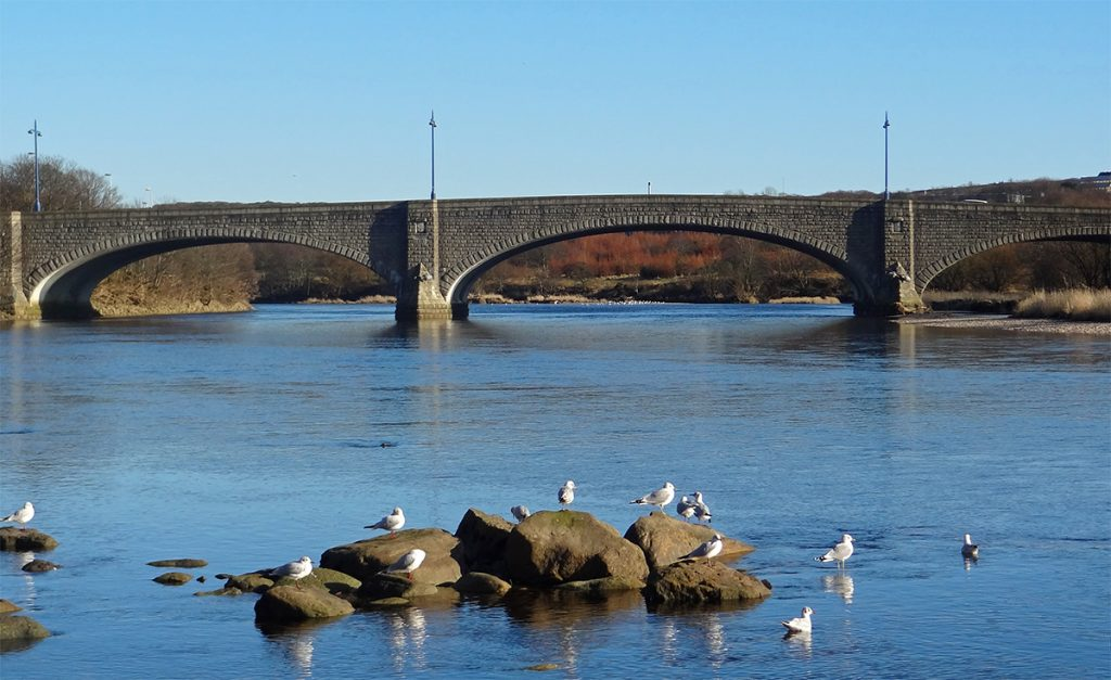 Gulls enjoying the Sun beside King George VI bridge