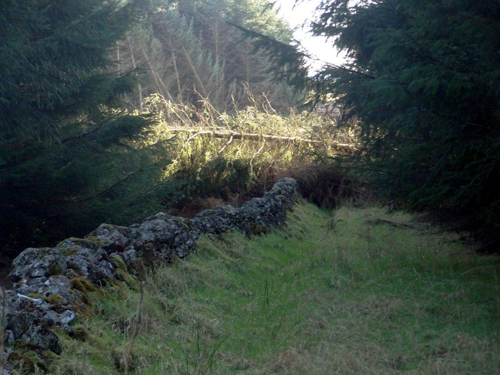 Tree falls blocking trails