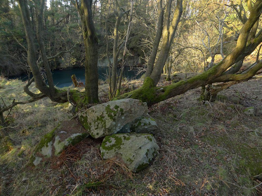Tree by Clochandighter quarry