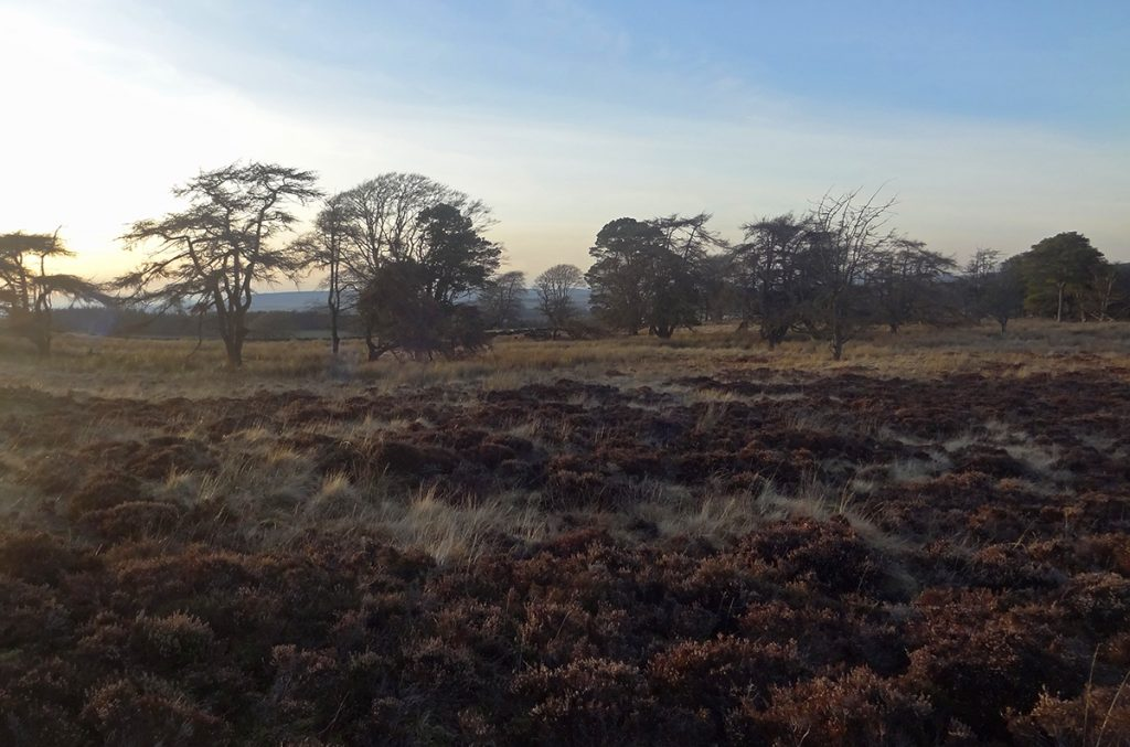 Moorland at the top of Hill of Auchlee