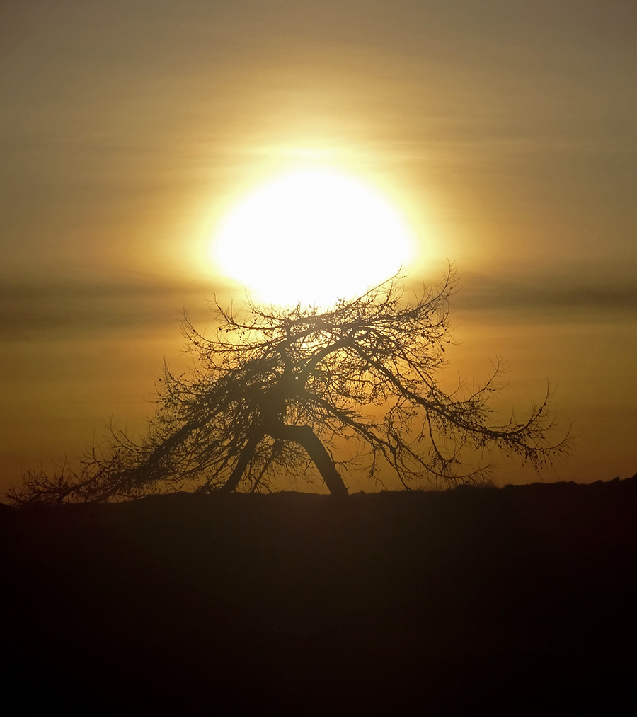 Sun setting over a windswept tree