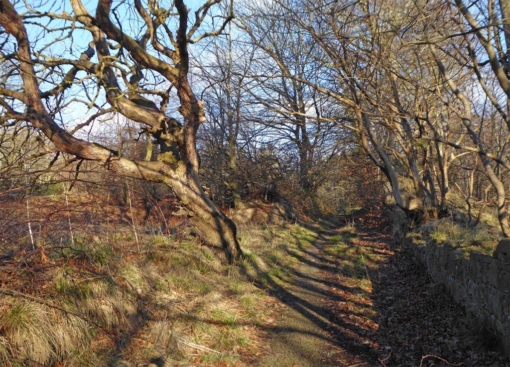 More tree shadows