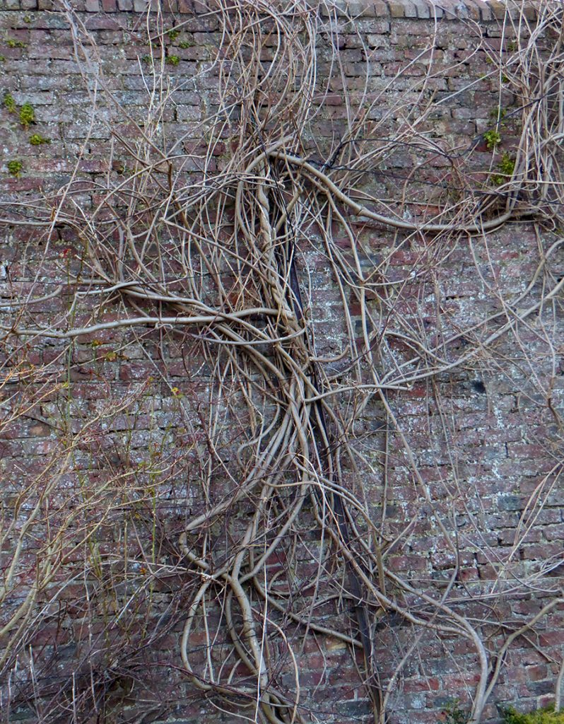 Wall tendrils