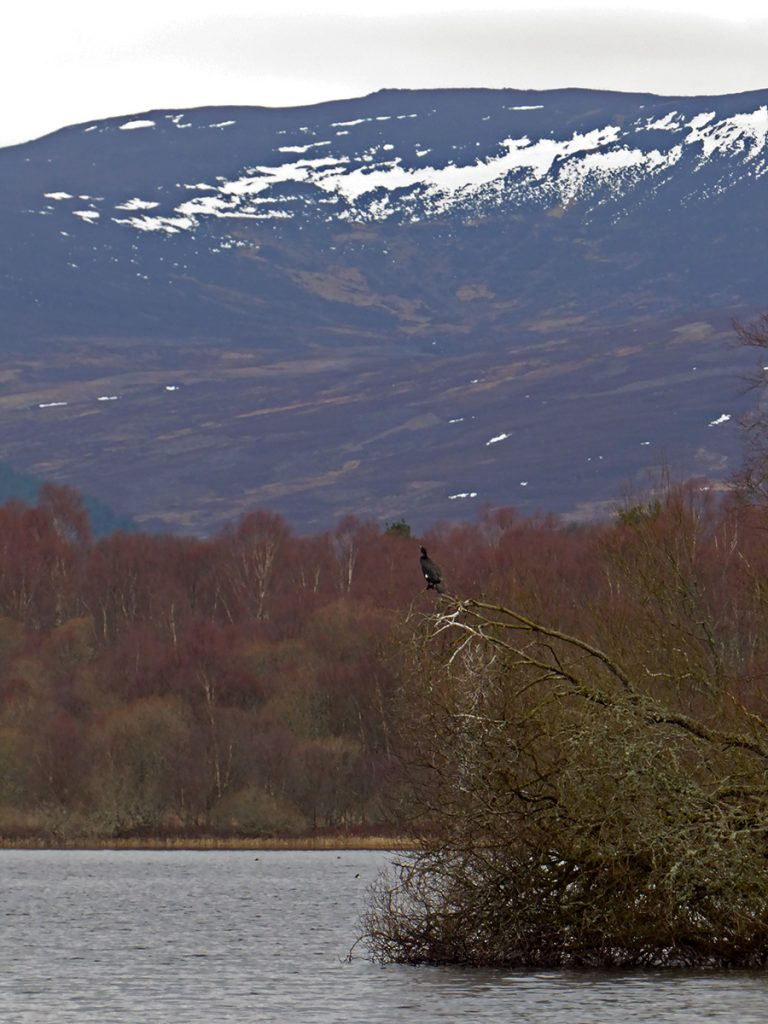 A cormorant surveys the loch