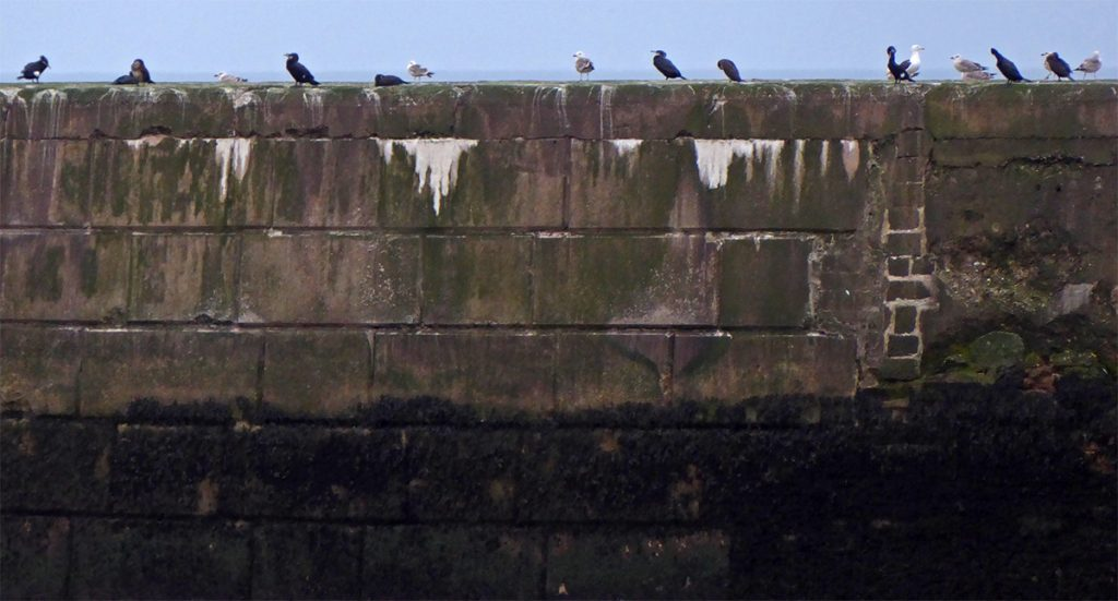Birds on the harbour