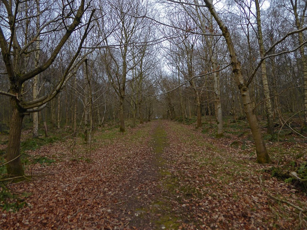 East through Clerkhill Wood