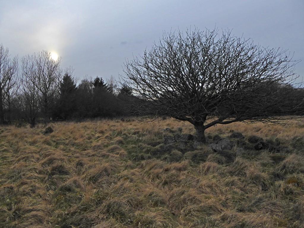 Across Grandhome Moss