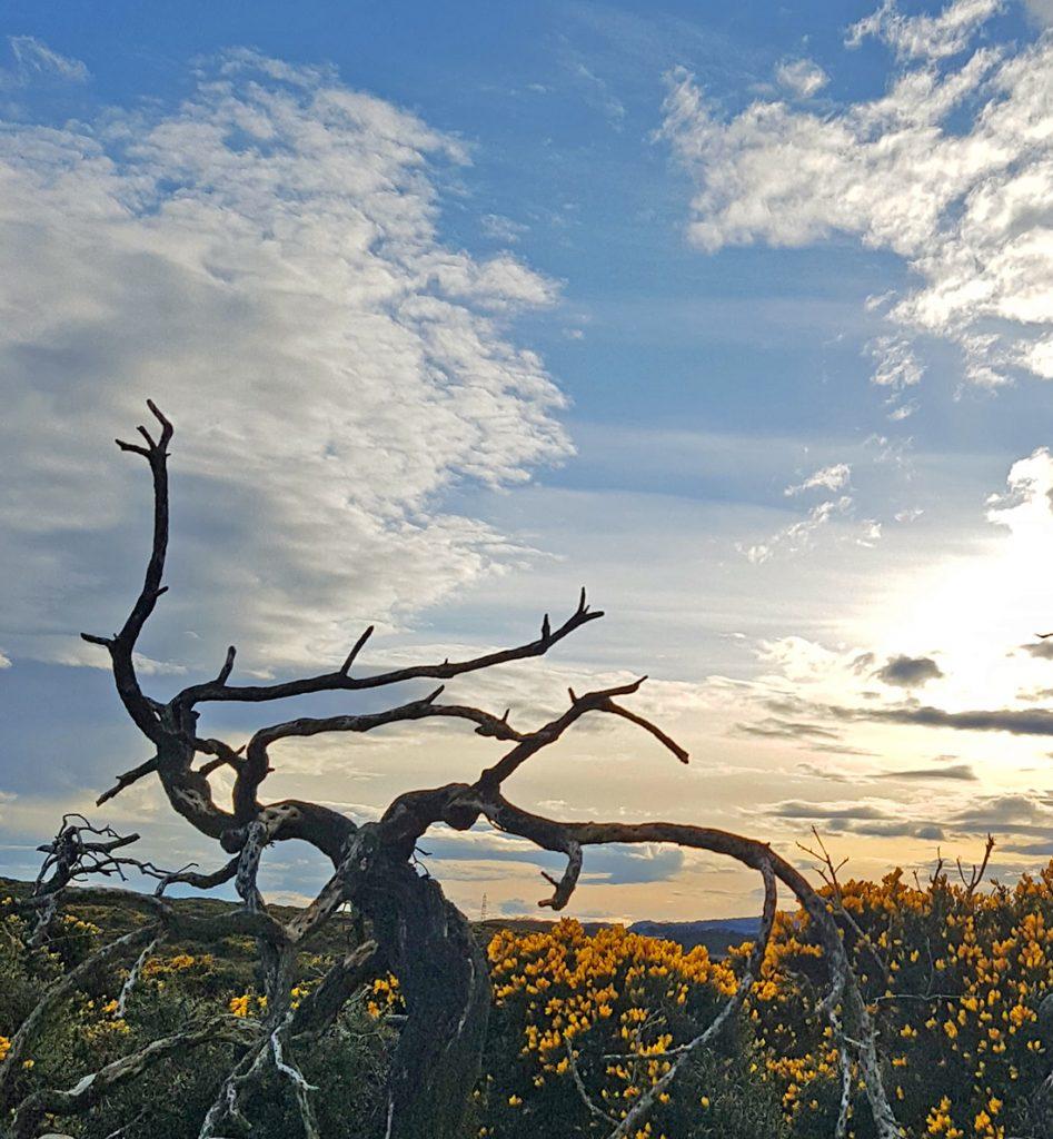 Scotstown moor spooky old bush