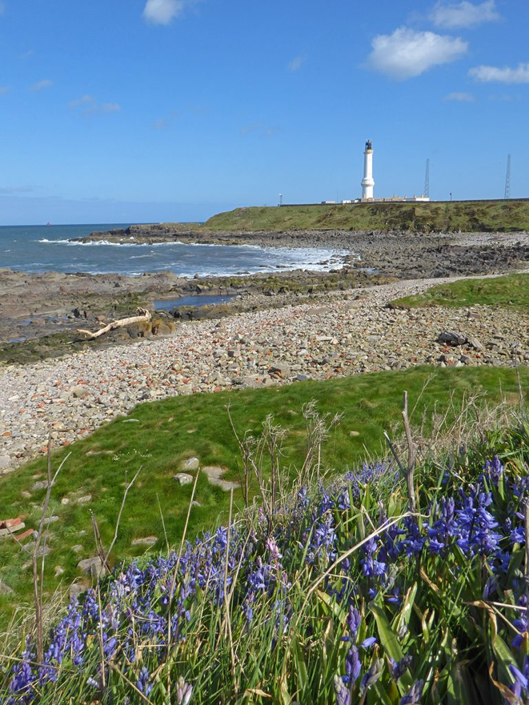 Bluebells and Blue skies at Girdleness Lighthouse