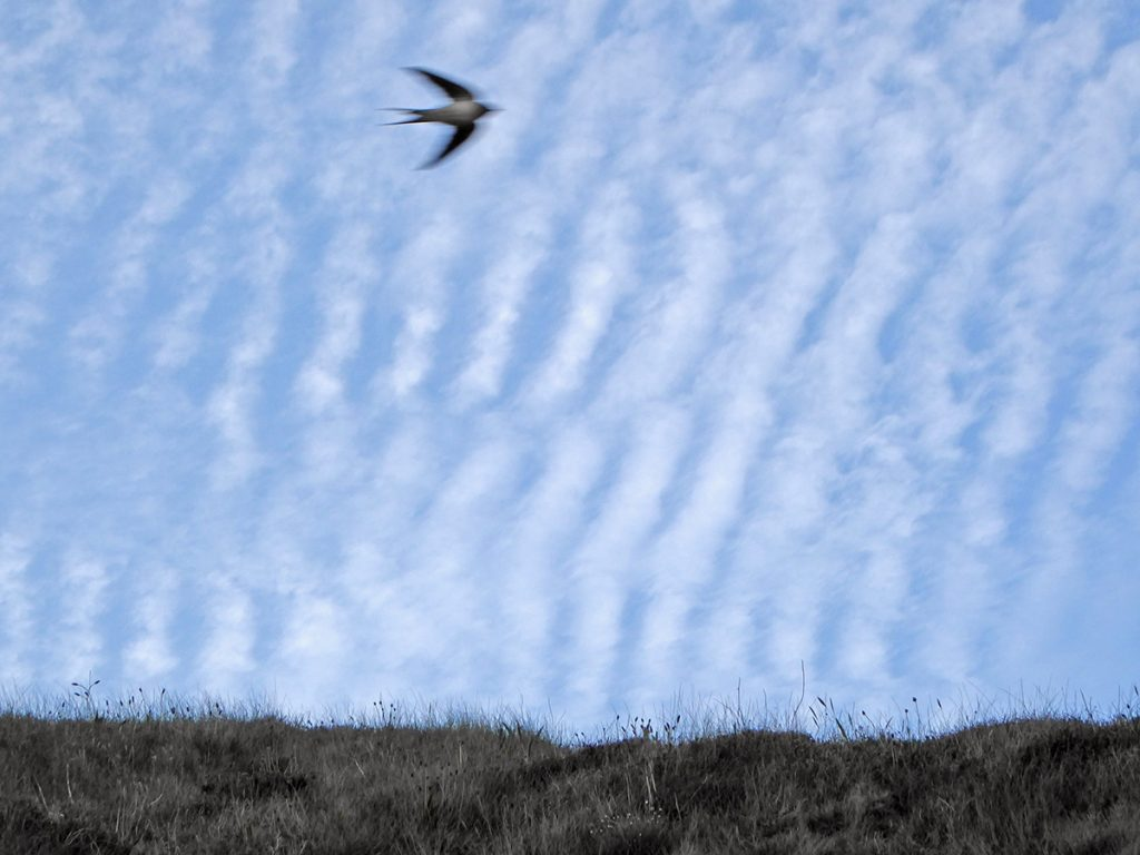 Swift and Altocumulus