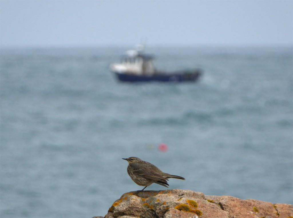 Nigg Bay bird and fishing boat