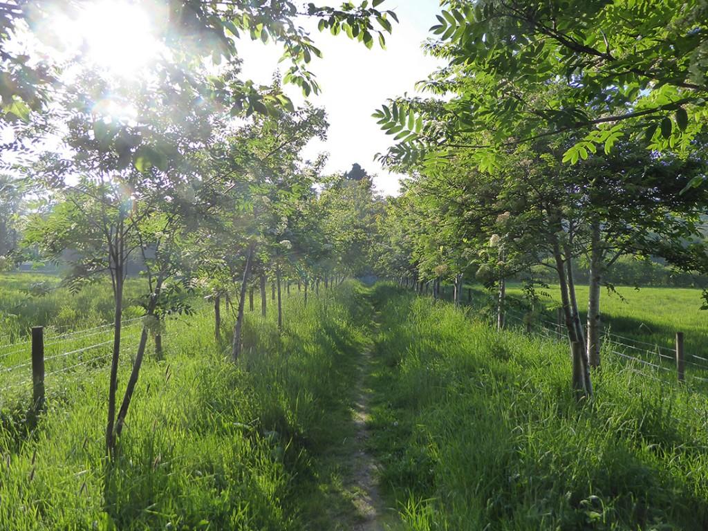 Path down to Beannachar