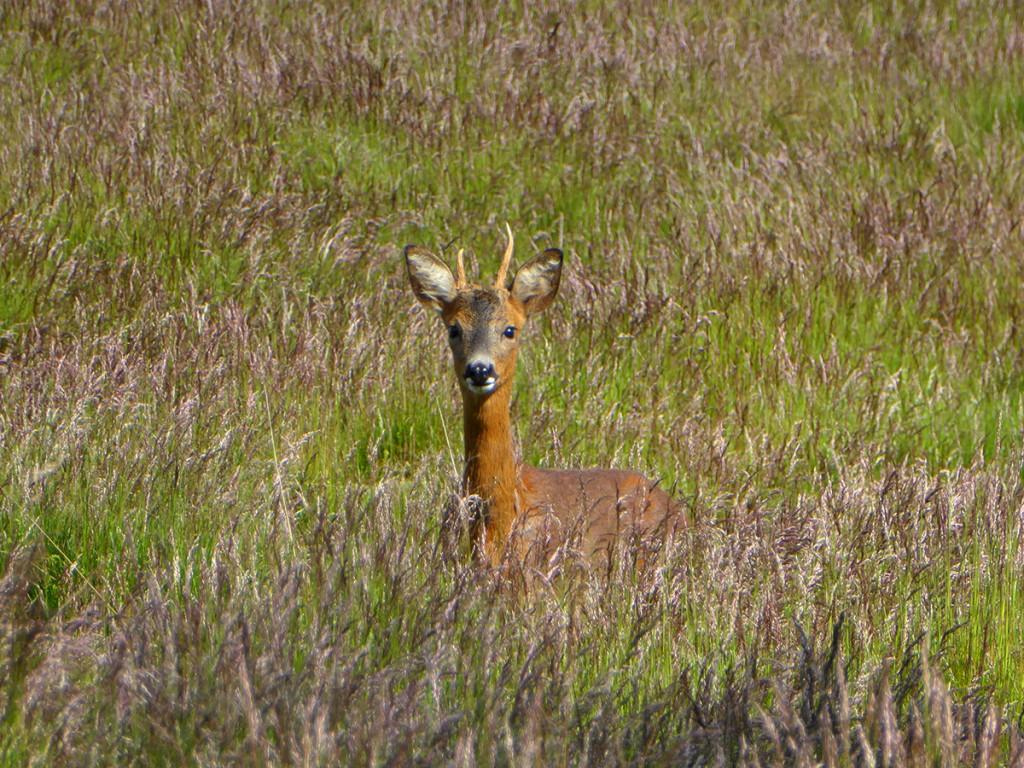 Deer at the edge