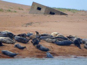 Seals n pill box